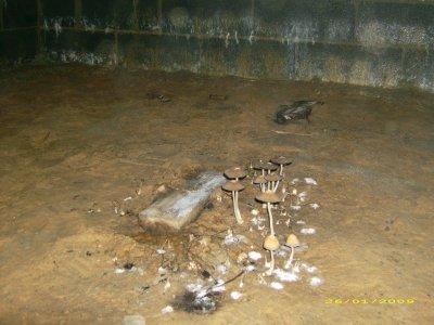 Blog de mamaison59980 page 38 construction de notre maison - Champignon vide sanitaire ...
